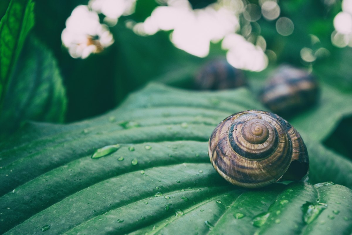 INGREDIENT SERIES: Snail Secretion Filtrate